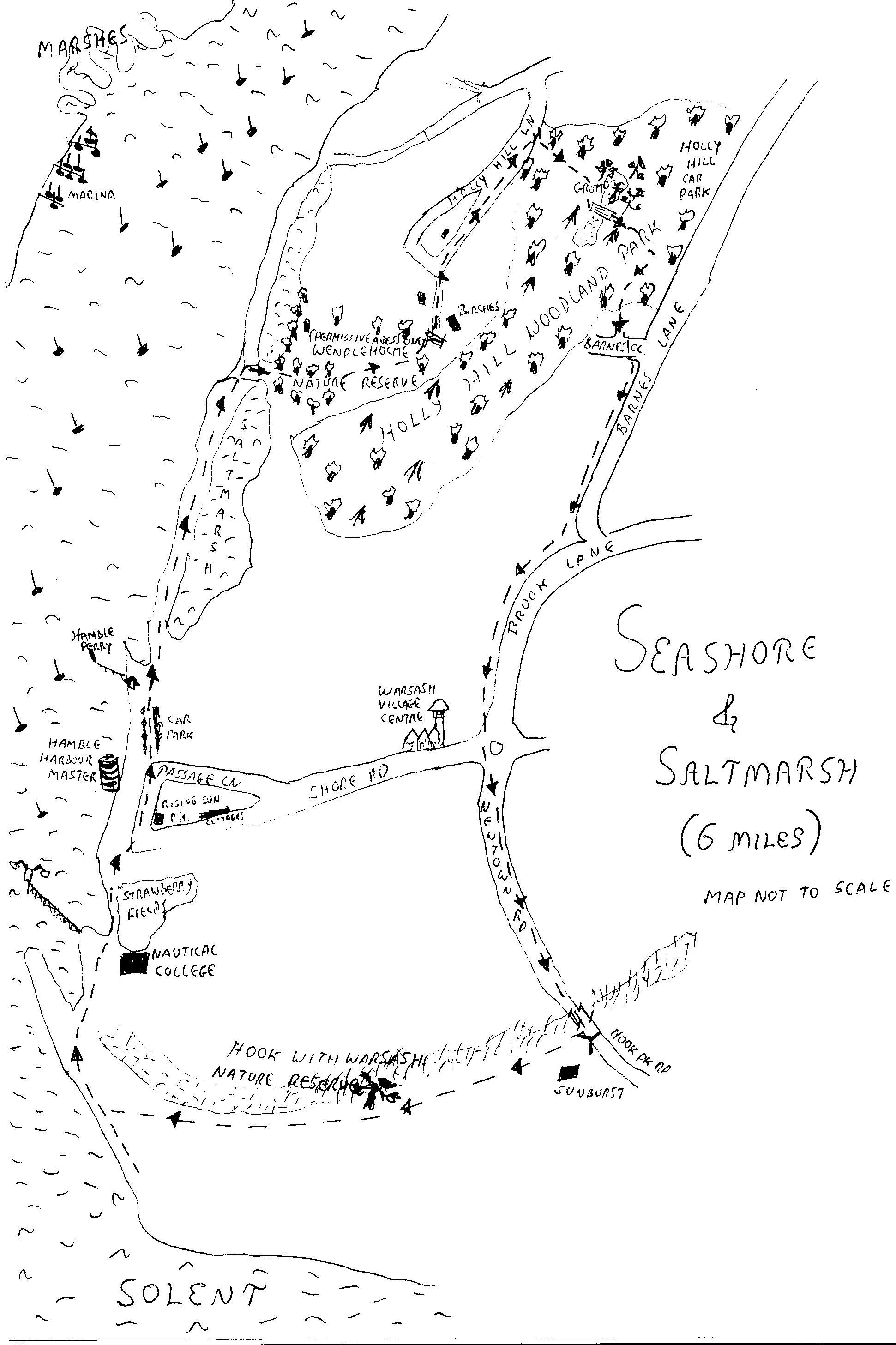 seashore saltmarsh.